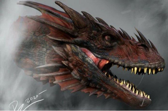 Rostro de dragón rojo adulto