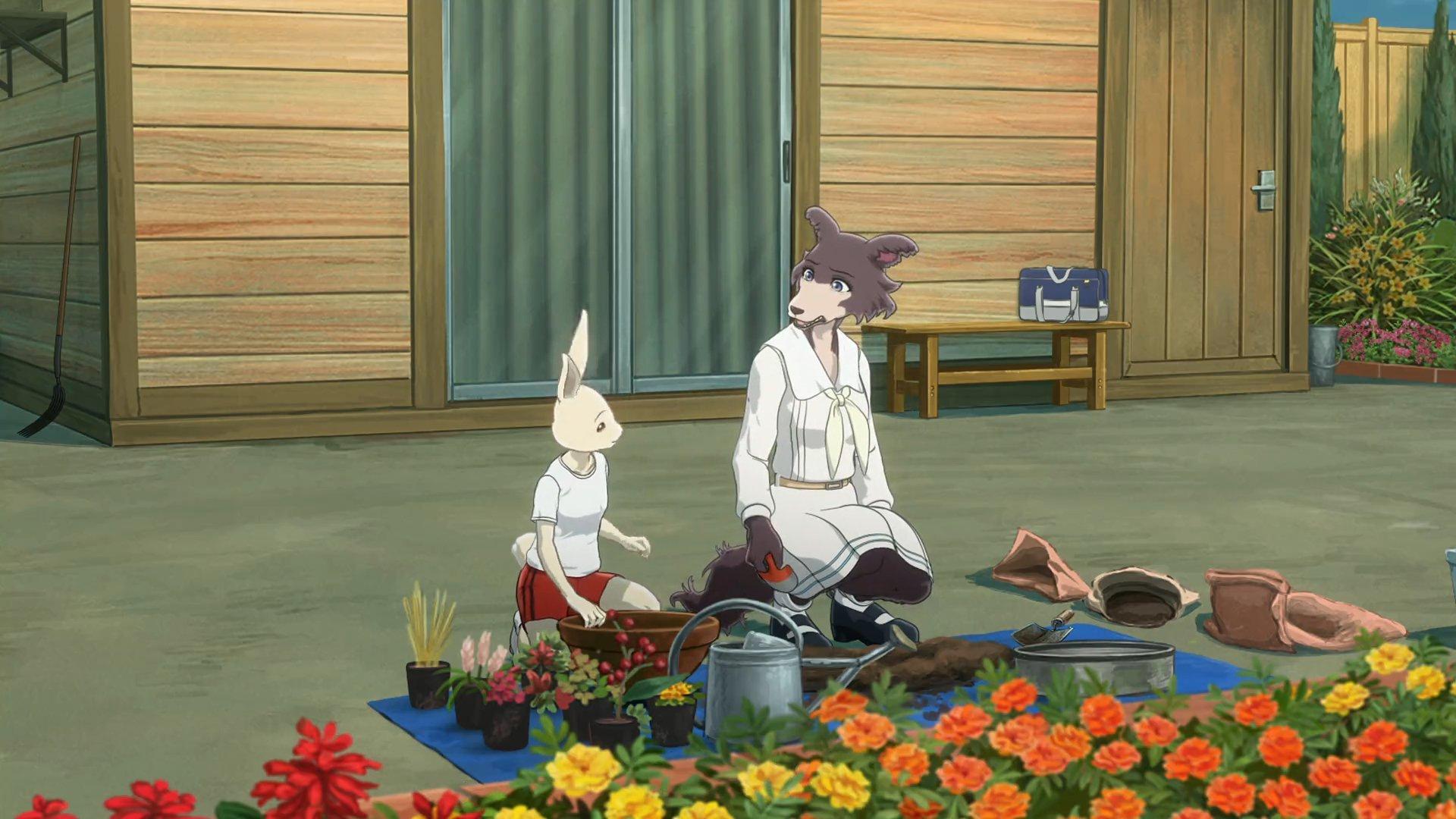 Imagen tomada del anime 'Beastars' con Haru y Juno compartiendo en el club de jardineria mientras se sientan a trasplantar plantas.