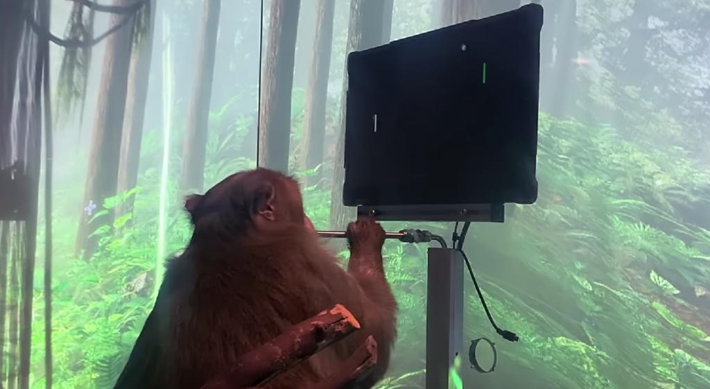 Mono jugando con su mente.