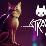 Stray.